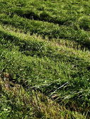 Mown meadow — Stock Photo