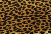 Black leopard spots — Stock Photo