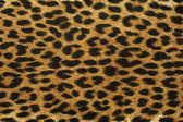 Close up leopard spot pattern — Stock Photo