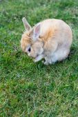 Small brown bunny on green grass in summer garden — Foto Stock
