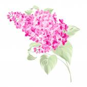 Spring syringa flowers background. — Stock Vector