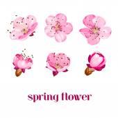 Sakura çiçekler. — Stok Vektör