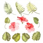 Hibiscus single tropical flower — Stock Vector #76187813