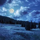Coniferous forest on a  mountain slope in moon linght — Stock Photo