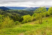 Fence on hillside meadow in mountain — Stock Photo