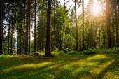 Forest glade in  shade of the trees in sunlight — Stockfoto