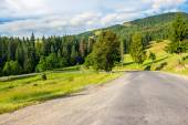 Going to coniferous forest — Stock Photo
