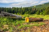 Log on a hillside near the  forests — Stock Photo