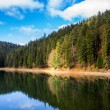 Pine forest and lake near the mountain early in the morning — Stock Photo #53039125