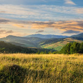 Trees near valley in mountains  on hillside under sky with cloud — Stock Photo