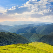 High wild plants at the mountain top — Stock Photo