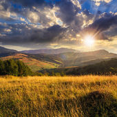 Trees near valley in mountains  on hillside at sunset — Stock Photo