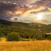 Hillside meadow with forest in mountain at sunset — Stock Photo
