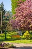 Parque de la ciudad vieja con la linterna — Foto de Stock