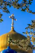 Apple flowers on blur domes of  church — Stock Photo