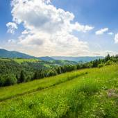 Coniferous forest on a  mountain slope — Stock Photo