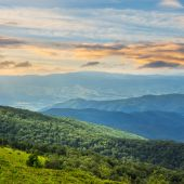Coniferous forest on a  mountain slope at sunrise — Stock Photo