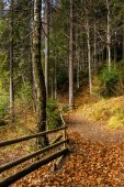 Forest walks in autumn — Foto Stock