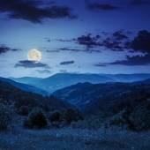 Pine trees near valley in mountains  on hillside at night — Foto Stock