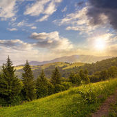 Coniferous forest on a  mountain slop at sunset — Stock Photo