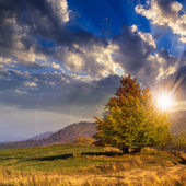 Tree near valley in mountains  on hillside under sky with clouds — Foto Stock