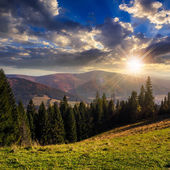 Coniferous forest on a  mountain slope at sunset — Stock Photo
