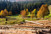 Logs on a hillside near the  forests — Stock Photo