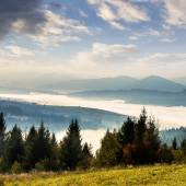 Forest over foggy valley in autumn mountains — Stockfoto