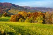 Trees on autumn meadow in mountains — Stock Photo