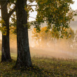 Yellow trees in fog — Stock Photo #56087947