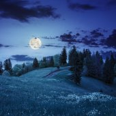 Coniferous forest on a  mountain slope at night — Stock Photo