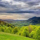 Foresta sul versante di una montagna — Foto Stock