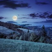 Pine forest on a  mountain slope at night — Stock Photo