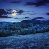 Trees near valley in mountains  on hillside at night — Stock Photo