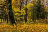 Autumn forest in foliage — Stock Photo