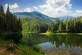 Pine forest near the mountain lake — Stock Photo
