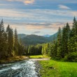 Mountain river in pine forest at sunrise — Stock Photo #60867633