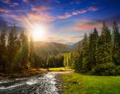 Mountain river in pine forest at sunset — Stock Photo