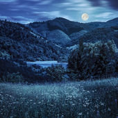 Pine trees near meadow in mountains at night — Stock Photo