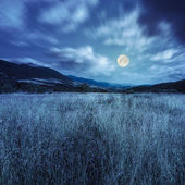 Meadow with high grass in mountains at night — Stock Photo