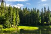 Беседка на берегу озера в лесу — Стоковое фото