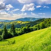 Floresta de coníferas, no topo de uma montanha — Fotografia Stock