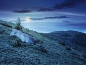 Lonely conifer tree and stone at night — Stock Photo