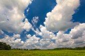 Green Field Blue Sky in Summer — Stock Photo