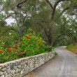 Stone Bridge and Path Lined with Camellia in Live Oak Forest — Stock Photo #65627673