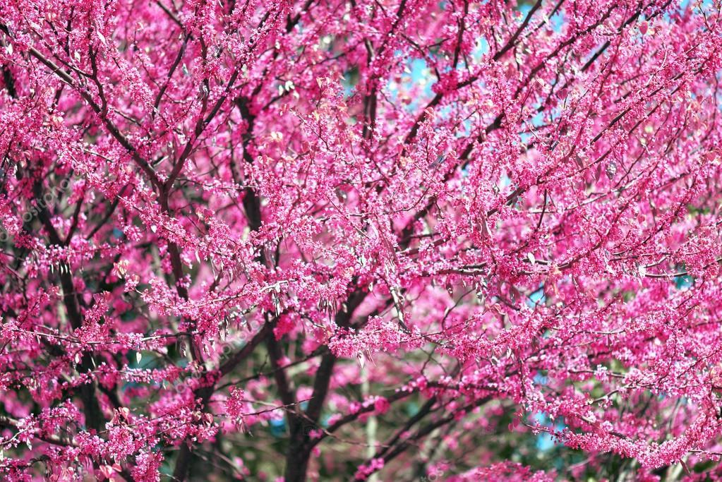 Flor rosa en flores de ramas de rbol en un paisaje de for Jardines en primavera fotos