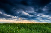 Sunset in yellow rapeseed field — Stock Photo