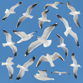 White bird collection on sky background — Photo