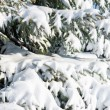 Fir tree branches with snow — Stock Photo #54410907