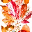 Autumn leaves watercolor print on paper — Stock Photo #55669141